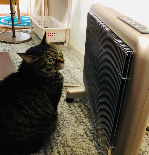 今朝の気温は? 猫でわかる_e0379544_11123019.jpg