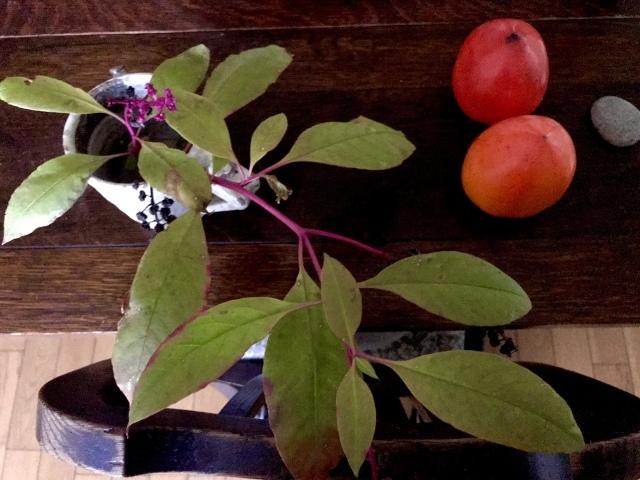 秋深まりゆく日、植木鉢を部屋に取り込む_d0101846_04092476.jpeg