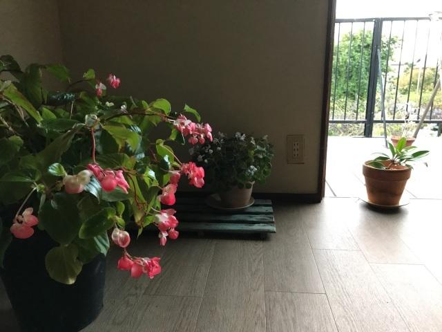 秋深まりゆく日、植木鉢を部屋に取り込む_d0101846_06554131.jpeg