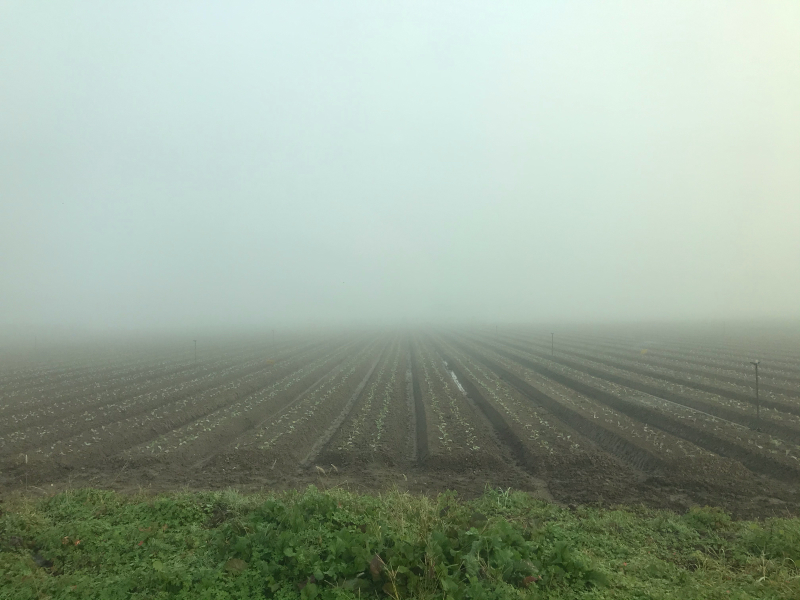 霧の中の風景 2019.11_f0169147_19490541.jpg