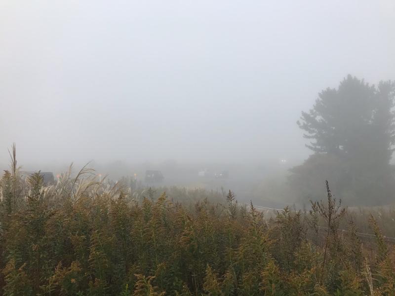 霧の中の風景 2019.11_f0169147_19533221.jpg