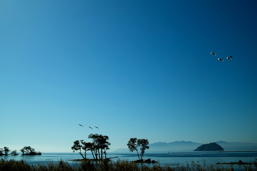 長浜ローカルフォト・・・琵琶湖、コハクチョウ、空_d0005250_18341592.jpg