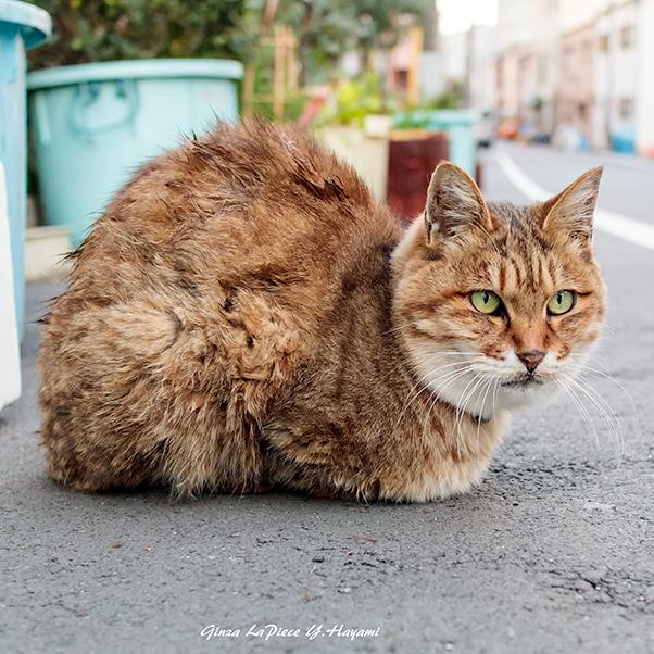 猫のいる風景 近所の子_b0133053_01423121.jpg