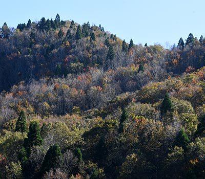 京都府 キノコ狩り 天然マイタケとサルナシにびっくり_e0035757_22040351.jpg