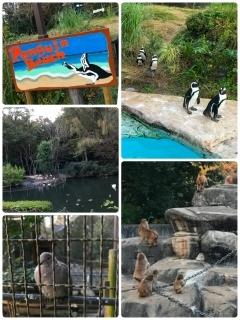 智光山公園 わくわく公園まつりありがとうございました!_a0087471_23055919.jpg