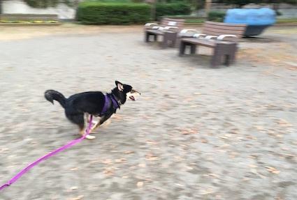 ただ走る犬_b0011075_15444493.jpg