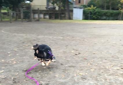 ただ走る犬_b0011075_15444901.jpg