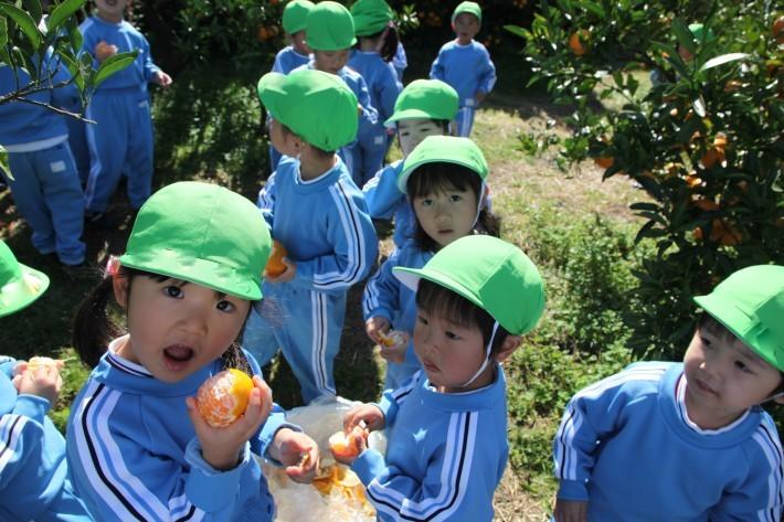 りんご・年少組 みかん狩りハイキング_b0277979_17450671.jpg