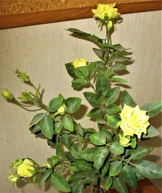 四季咲きの黄色いバラさく _b0163804_14040680.jpg