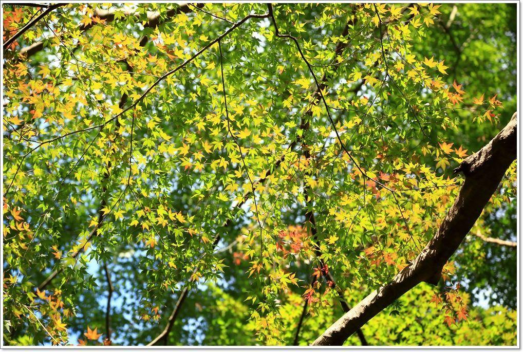 愛南町 正木の花取り踊り_a0057905_16430209.jpg