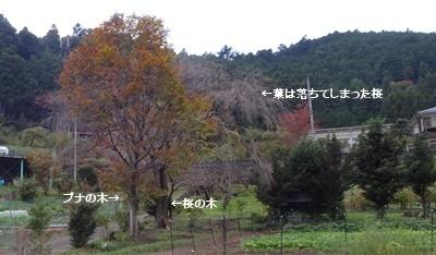 富士山 満月 畑 の備忘録_c0051105_22331549.jpg