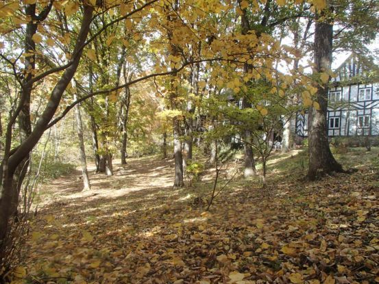 庭の黄葉と落ち葉_f0064906_15184373.jpg