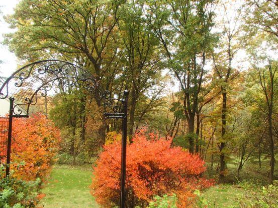庭の黄葉と落ち葉_f0064906_15185092.jpg