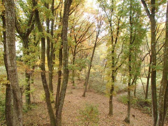 庭の黄葉と落ち葉_f0064906_15190356.jpg