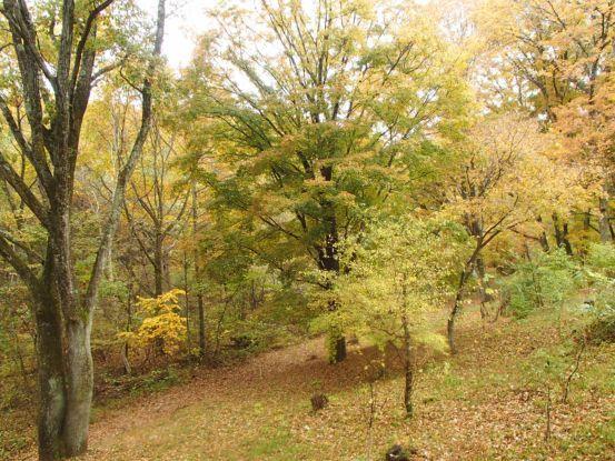 庭の黄葉と落ち葉_f0064906_15190752.jpg