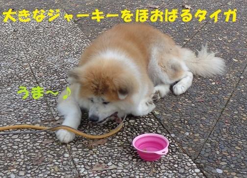 f0121712_00404129.jpg