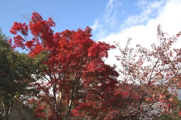 紅葉が始まった 常照寺_e0048413_21134851.jpg