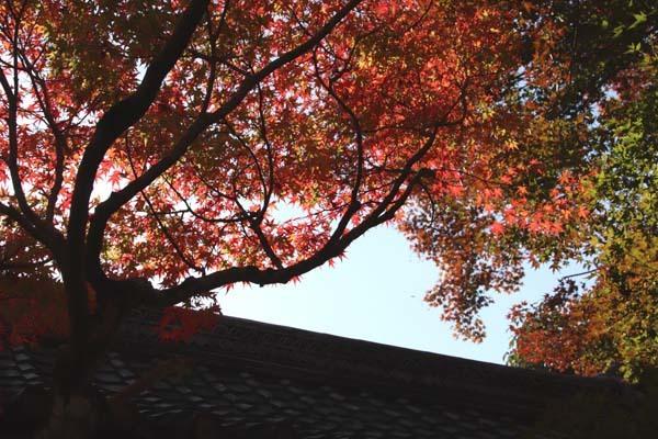 紅葉が始まった 常照寺_e0048413_21135899.jpg