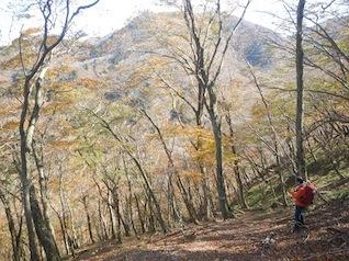 御在所岳・本谷から鈴鹿の上高地へ(ヤブコギネット・オフ会)_c0359615_21553107.jpg