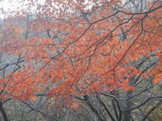 御在所岳・本谷から鈴鹿の上高地へ(ヤブコギネット・オフ会)_c0359615_21561303.jpg