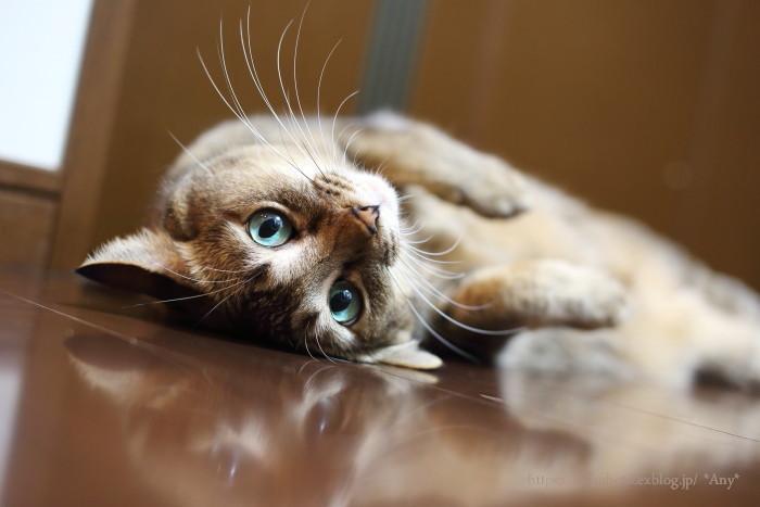 猫がいる暮らし - 24 -_e0347431_13172757.jpg