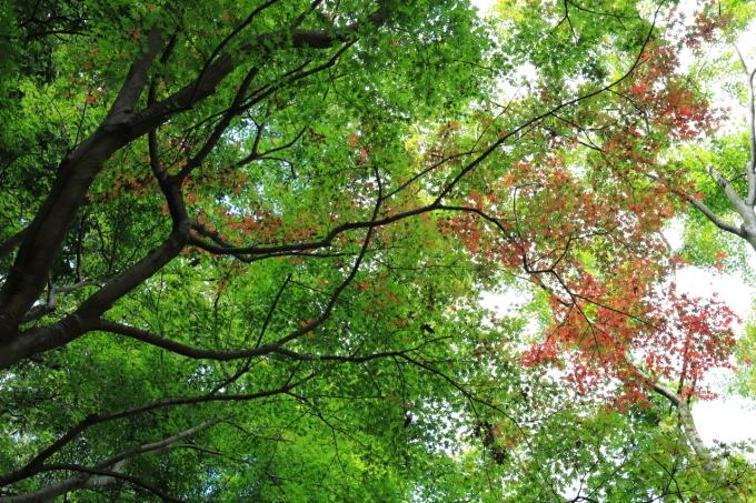 【神奈川県立 七沢森林公園】_f0348831_00060524.jpg