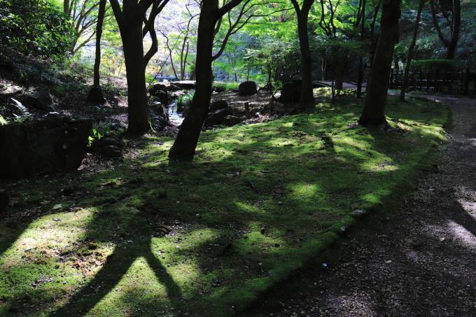 【神奈川県立 七沢森林公園】_f0348831_00060909.jpg