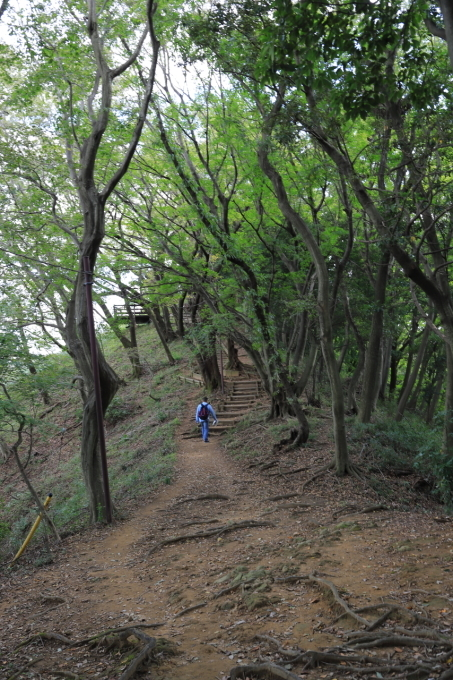 【神奈川県立 七沢森林公園】_f0348831_00064059.jpg