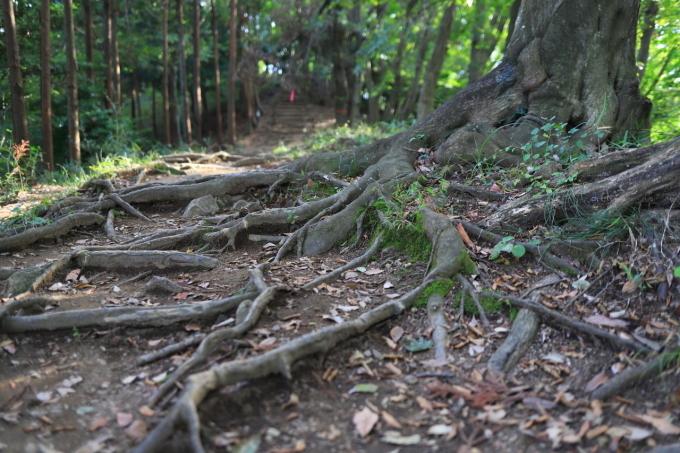 【神奈川県立 七沢森林公園】_f0348831_00064926.jpg