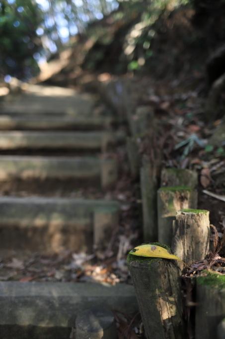 【神奈川県立 七沢森林公園】_f0348831_00065534.jpg