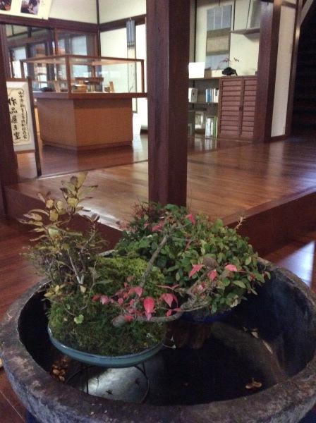「芭蕉の館」と盆栽_f0289632_23354221.jpg