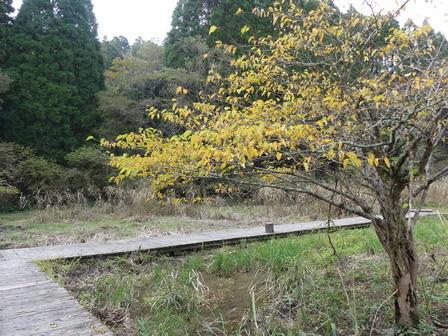 秋の風情_a0123836_17145230.jpg