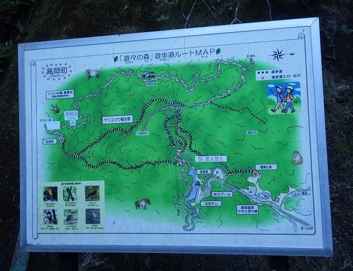 南九州への山&花旅・・・高房山、ヤッコソウ_e0164643_15054426.jpg