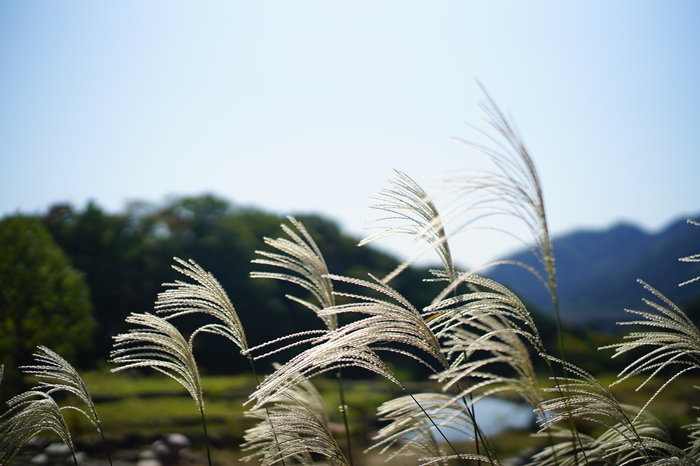 an autumn day🍂_f0057849_15435285.jpg