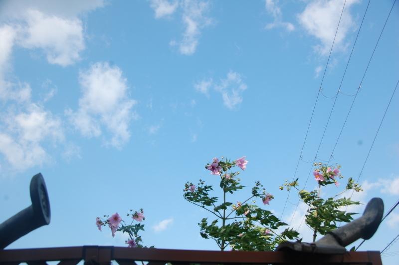 朝のちょこっと雨は休養日_c0108460_13412060.jpg