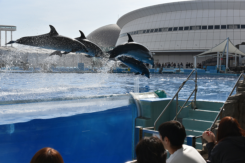 名古屋港水族館_e0164563_14083603.jpg