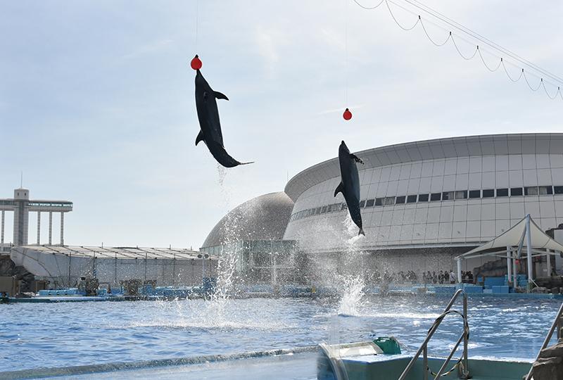 名古屋港水族館_e0164563_14083758.jpg