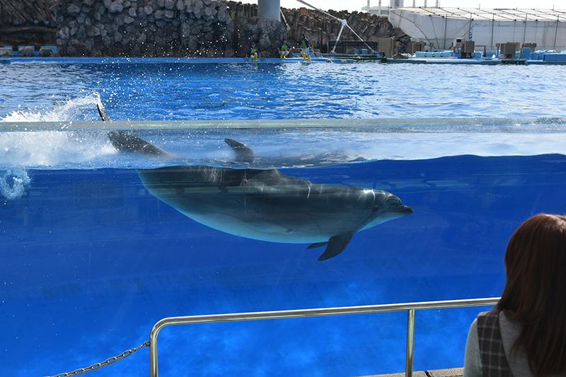 名古屋港水族館_e0164563_14083768.jpg