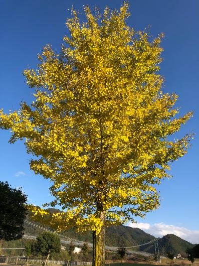 秋です_f0126965_22041565.jpg
