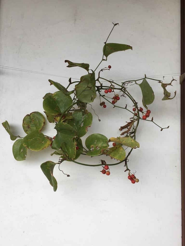 『赤い実を採りに』&『クリスマス準備ほぼ整いました』_c0334574_16475986.jpg