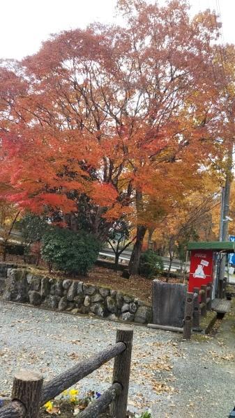 飯田高原の紅葉_e0262382_21080279.jpg