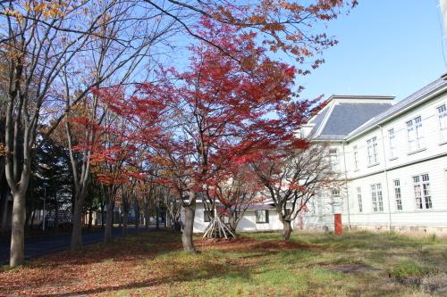 重文本館前庭・後庭の紅葉_c0075701_19202538.jpg