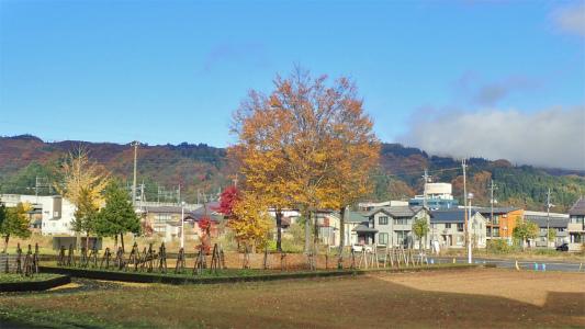 配送日の秋風景から_c0336902_19275296.jpg