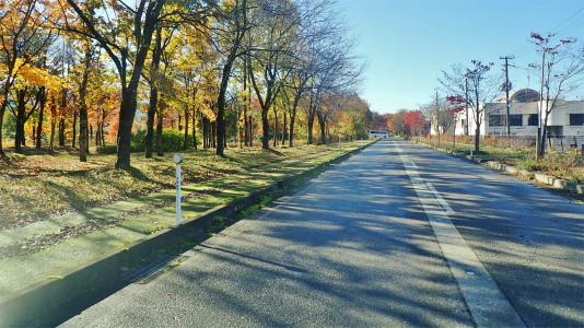 配送日の秋風景から_c0336902_19284574.jpg