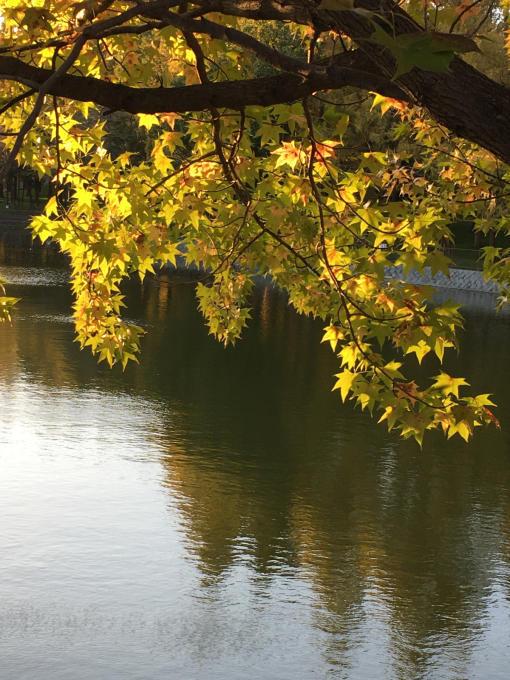 深まる秋…🍁🍁🍁_c0162404_10420059.jpg