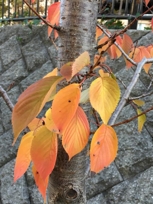 深まる秋…🍁🍁🍁_c0162404_10421390.jpg