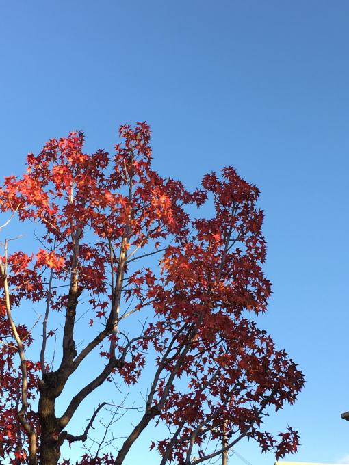 深まる秋…🍁🍁🍁_c0162404_10424069.jpg
