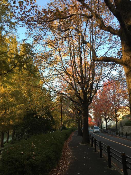 深まる秋…🍁🍁🍁_c0162404_10444282.jpg
