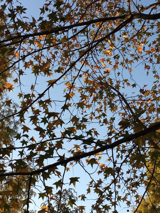 深まる秋…🍁🍁🍁_c0162404_10445055.jpg