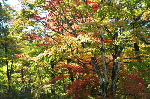 日光 田母沢御用邸記念公園の庭園1_a0263109_15383878.jpg